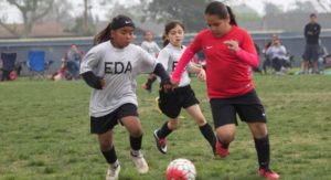 eda training tryouts